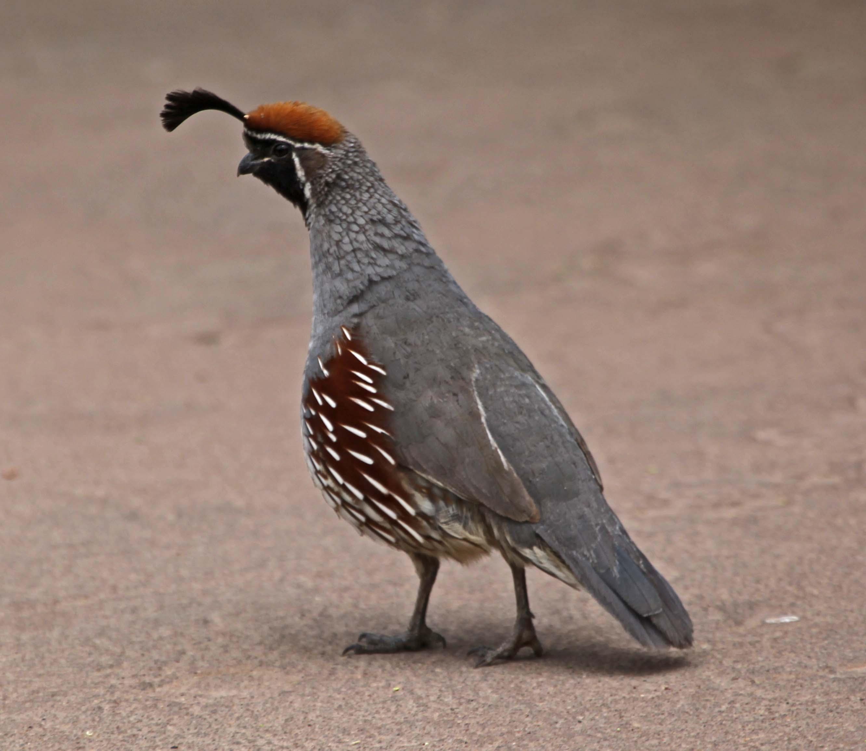 https://i1.wp.com/www.nejohnston.org/birds/2010/04/Images/IMG_3707.jpg