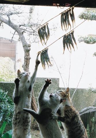 crime_cat06