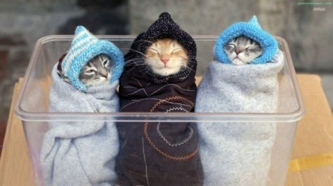 purritos_cat03