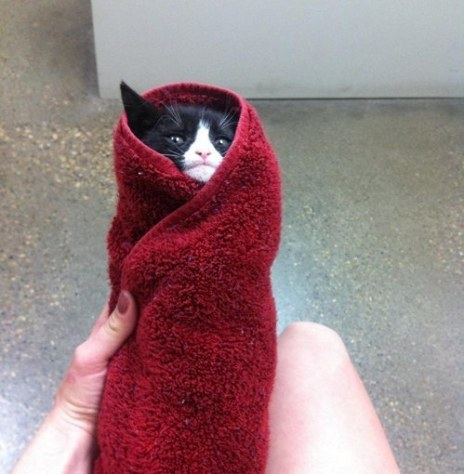 purritos_cat05