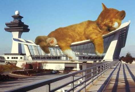 cat_architecture02