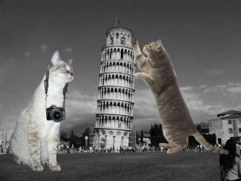 cat_architecture05