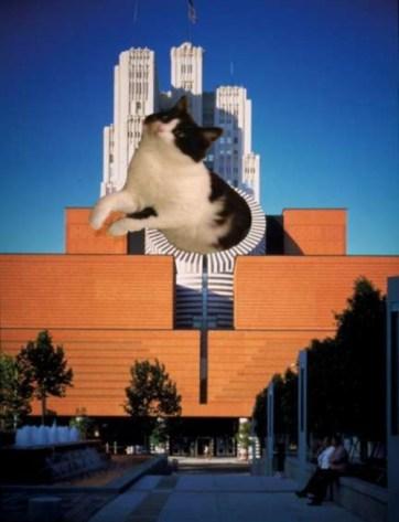 cat_architecture00