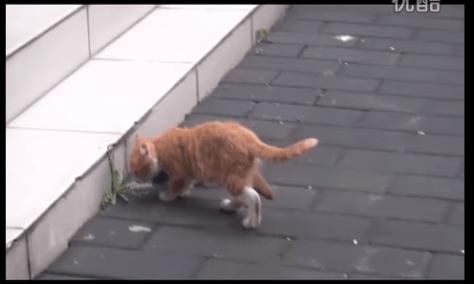 cat_weasel12