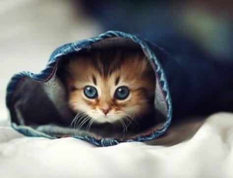cats_eye06