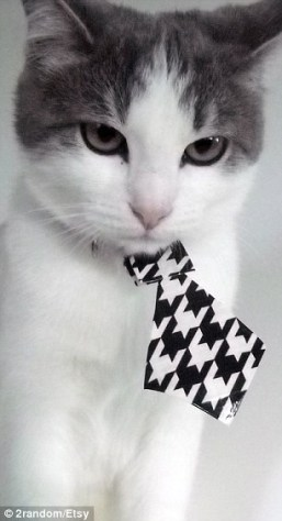 formal_cat01