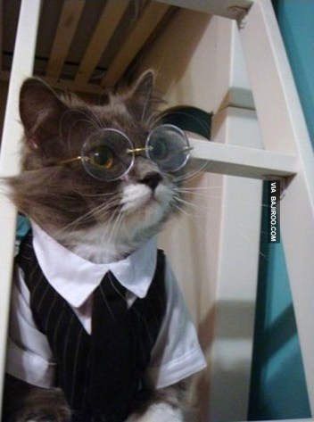formal_cat05
