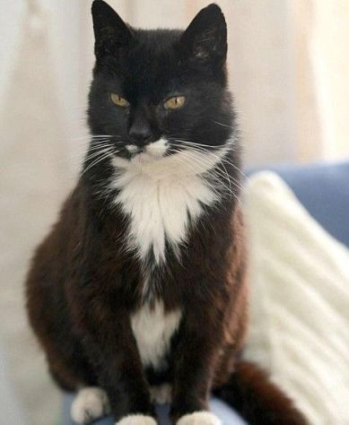 oldest-cat-in-the-world