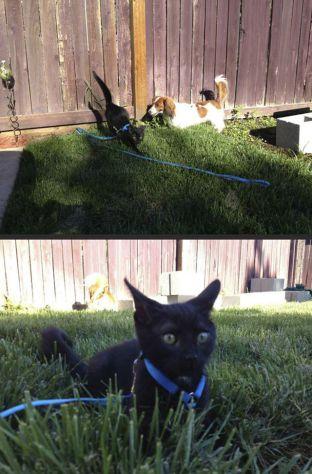 outdoor_cat03