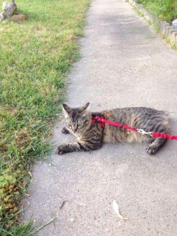 outdoor_cat06