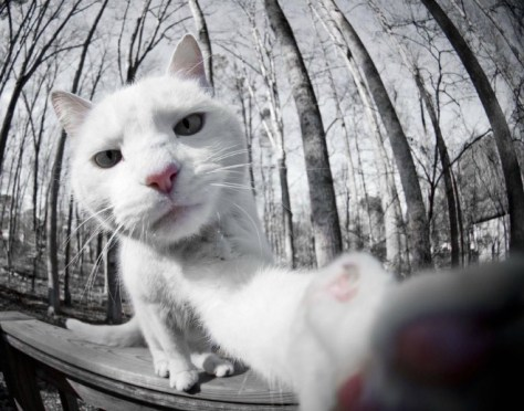 selfie_cat10
