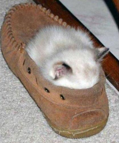 sleeping_cat03