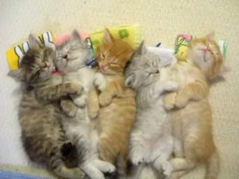 sleeping_cat07