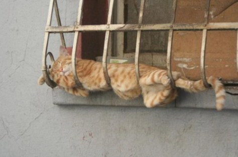 sleeping_cat08