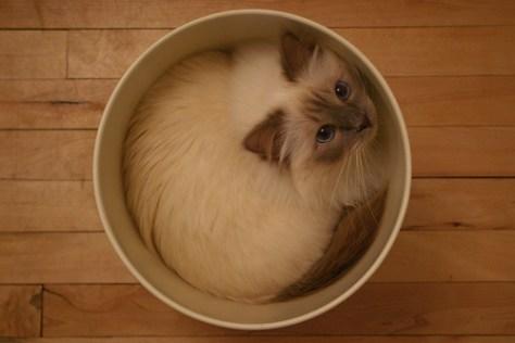 water_cat_08