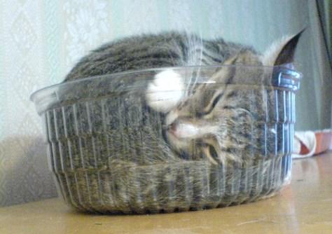 water_cat_10
