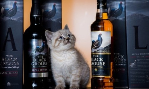 whisky_cat05
