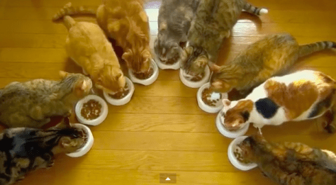 9cats_breakfast06