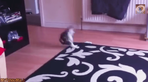 carpet_jump_cat02