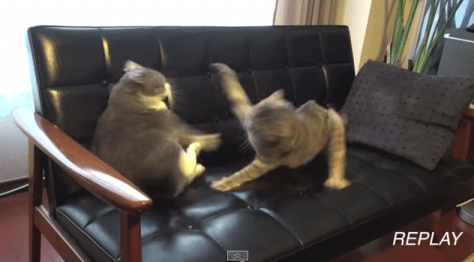 slow_cats_battle06