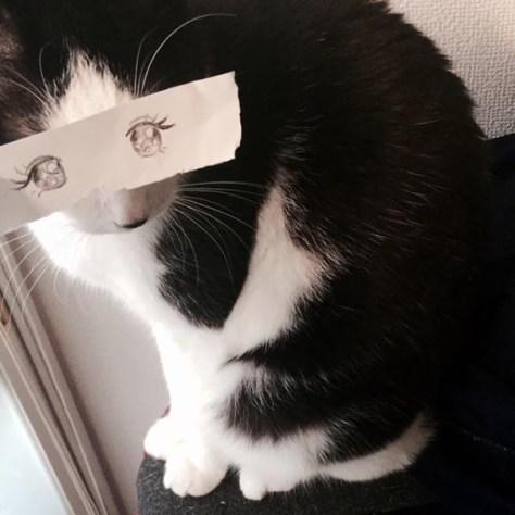 cat_anime_eye04