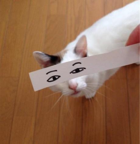 cat_anime_eye06