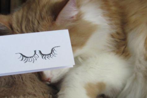 cat_anime_eye09