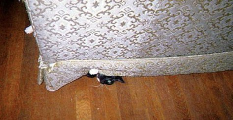 hide_and_seek_cat09