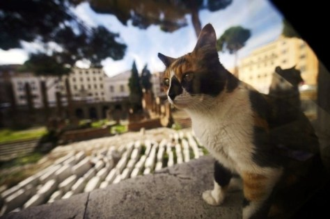 rome_cats01