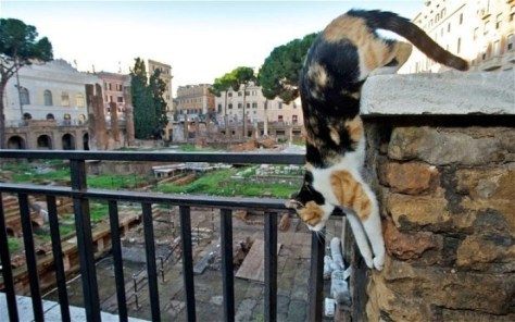 rome_cats02
