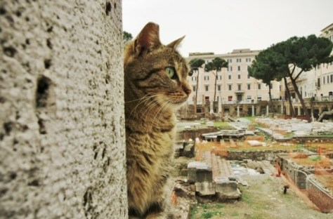 rome_cats03