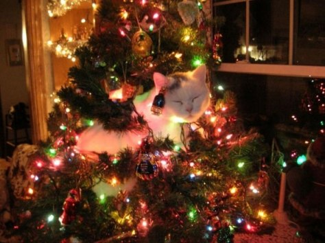 cat_christmas_tree01