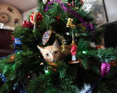 cat_christmas_tree08