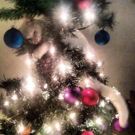 cat_christmas_tree10