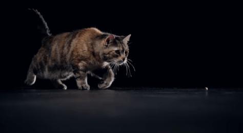 temp_cat_cm05