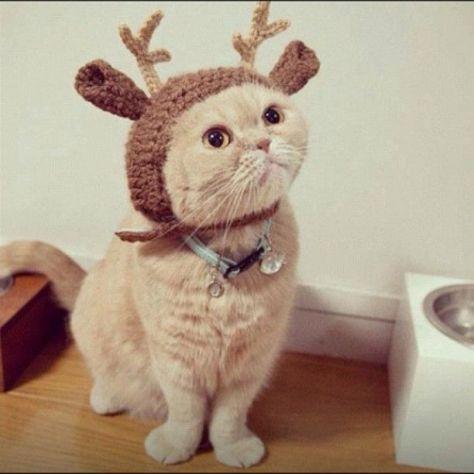 xmas_best_cat02