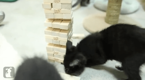 cat_plays_jenga07