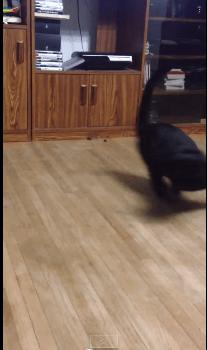 rolling_cat05