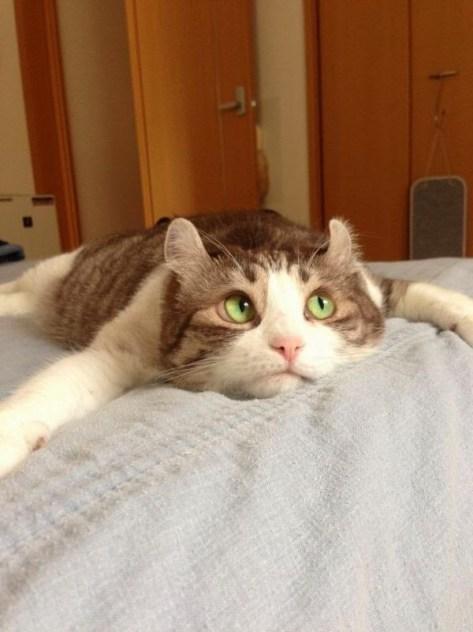 【猫画像】考え中