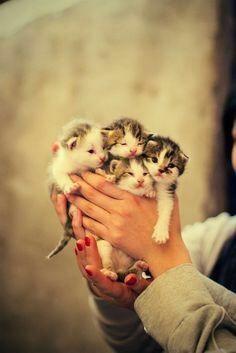 【猫画像】子猫ドッサリ!