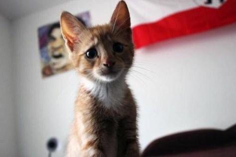 【猫画像】そりゃないっすよ顔