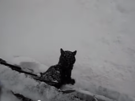 cat_jump_to_snow03