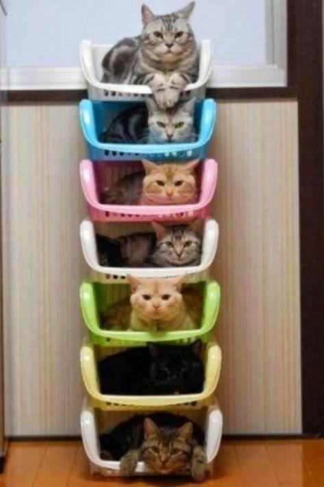 【猫画像】猫マンション