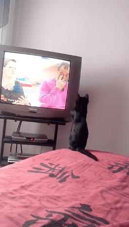 cat_loves_tv01