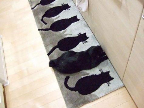 ninja_cat06