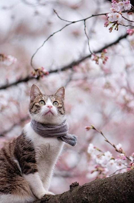 【猫画像】春の猫