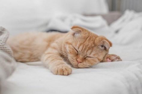 【猫画像】寝足りない・・・