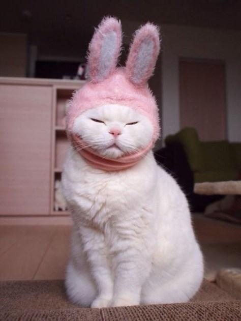 【猫画像】うさぎ?