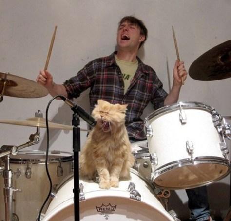 【猫画像】猫、絶叫