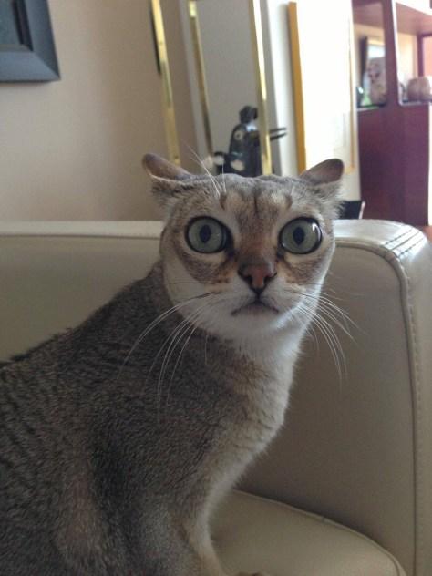 【猫画像】マジ?